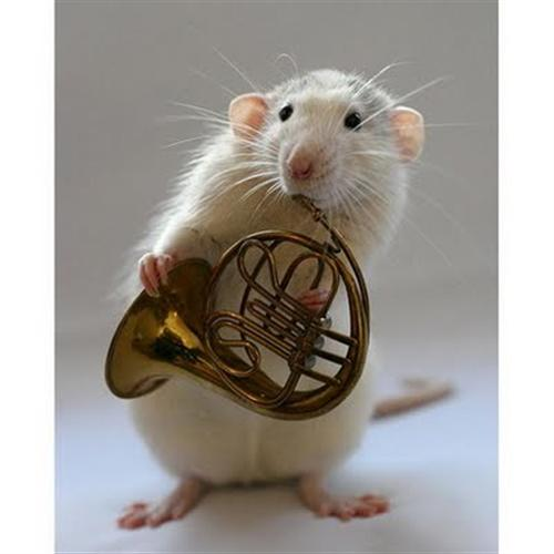 horn mouse